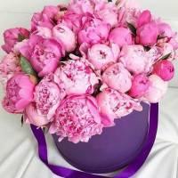 25 розовых крупных пионов в коробке R454